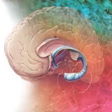 zdorovyj-obraz-zhizni-effektivnoe-lechenie-sindroma-demencii