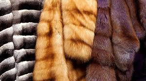 Важное событие в жизни каждой женщины – это приобретение стильных меховых изделий высокого качества